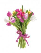 multi colour tulips